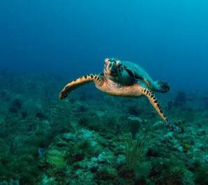 plongée sous marine tortue